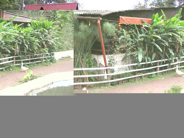 cabana-yeyo2